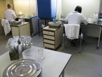 In vitro technicians at work